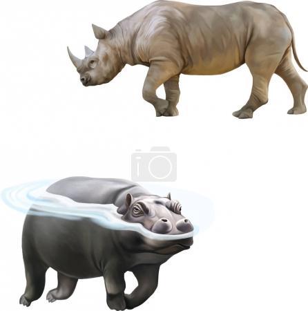 illustration of african Rhinoceros