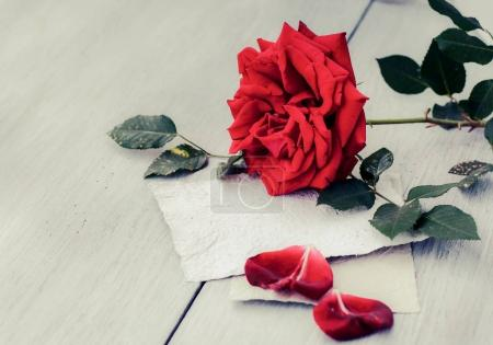 Red Rose on book
