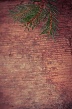 branch of Christmas tree on wooden background