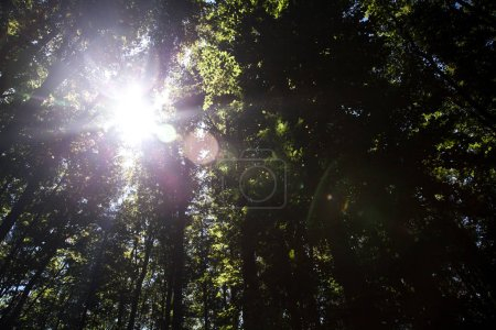 Photo for Beautiful green forest a beautiful green forest a - Royalty Free Image