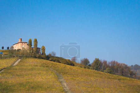 medieval castle surrounded by vineyards