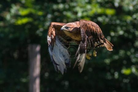 Eagle animal on nature