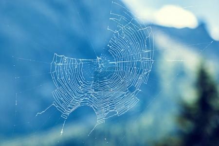 Beautiful cobweb with blue bokeh background