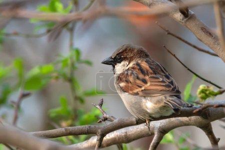 Sparrow bird sitting on tree branch