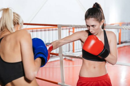 Professional determined sportswomen having a sparring