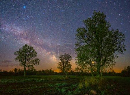 Stars Shining in sky at night over oaks