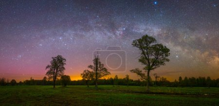 Stars Shining in sky at night over Old oaks