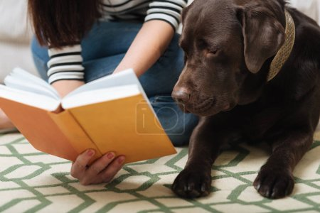 Smart cute Labrador looking at something in a book