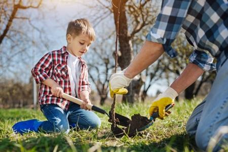 Little boy planting tree with his dad