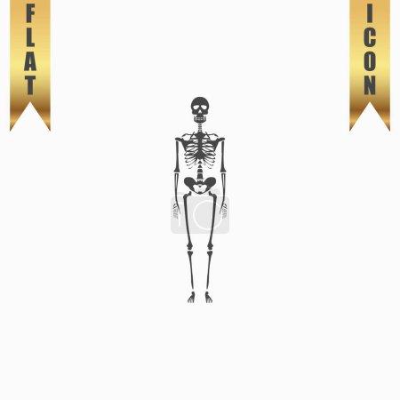 Skeletons - human bones