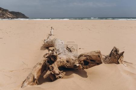 View of abandoned beach with with dry plants