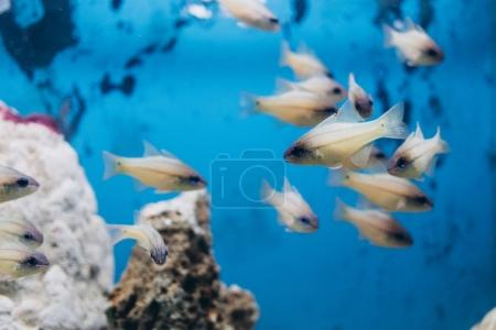Exotic fishes swimming near corals in aquarium