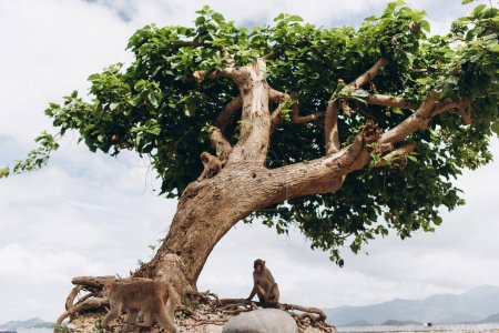 close-up of tropical tree with little monkey on blue sky on island