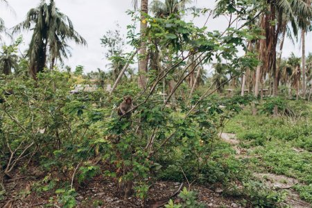 close-up of tropical trees with little monkey on blue sky on island