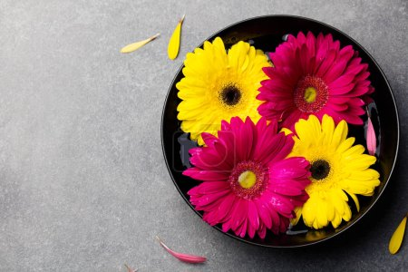 Colorful gerbera flowers floating in a black bowl. Grey stone background. Top view. Copy space.