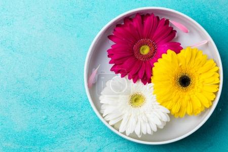 Gerbera flowers floating in a bowl with water. Blue stone background. Top view. Copy space.
