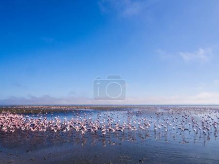 flamingos on Walvis Bay Lagoon.