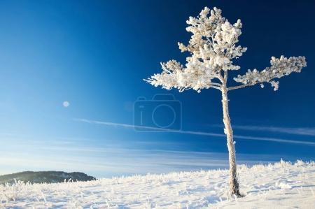 Photo for Karkaraly mountains - a mountain range in the Karaganda region of Kazakhstan - Royalty Free Image