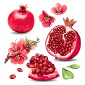Fruit Pomegranate and pink flowers