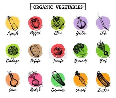 organic vegetables logos set