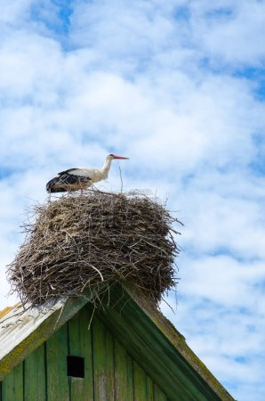 Stork on roof of village house on background of sky