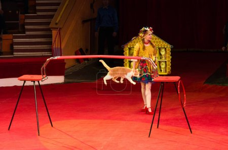 Tour of Moscow Circus named after Nikulin. Cat Games under leadership of Julia Silantieva
