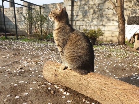 Domestic tabby cat on a log...