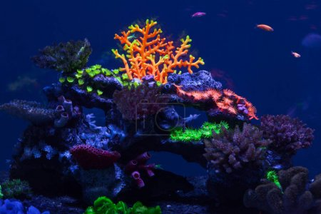 Multicolored corals under water