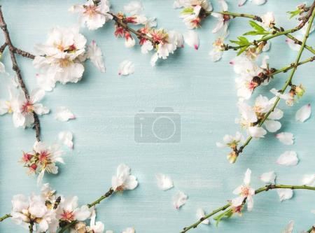 Spring floral background, texture and wallpaper. White almond blossom flowers over light blue background