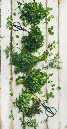 Photo for Bunches of various fresh green kitchen herbs. Parsley, mint, dill, cilantro, rosemary, thyme over white wooden background - Royalty Free Image