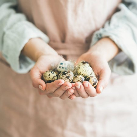 Natural colored quail eggs in feminine hands with feather