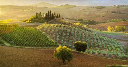 Photo for Tuscany Landscape,autumn field,lonely house in Tuscany - Royalty Free Image