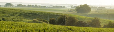 Photo for Panorama of young, green cereal on the field - Royalty Free Image