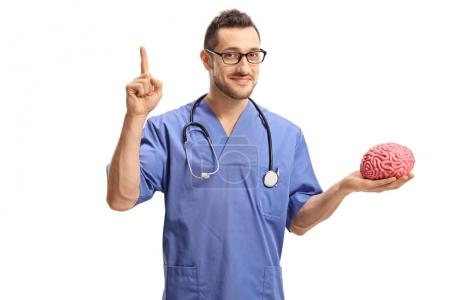 Doctor holding a brain model and pointing up