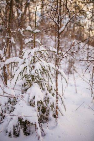 Photo pour Paysage enneigé et arbres le jour de l'hiver - image libre de droit