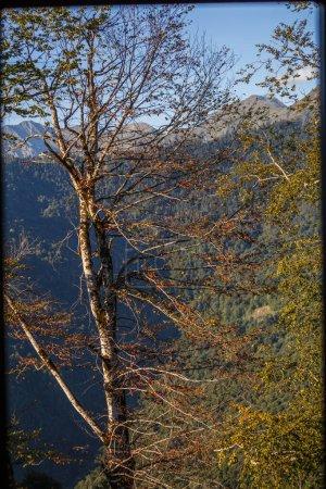 Photo pour Photo d'arbres en toile de fond d'une région montagneuse pittoresque pendant la journée - image libre de droit