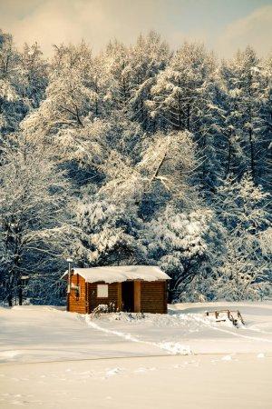 Photo pour Image d'arbres d'hiver avec neige et ciel bleu pendant la journée - image libre de droit