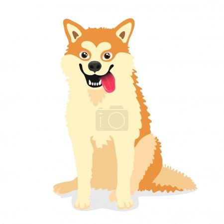 Cute dog of the breed Akita inu