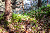 beautiful bright green moss on ground in forest