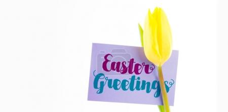Easter greeting against tulip with card