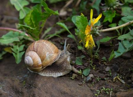 Snail and yellow flower