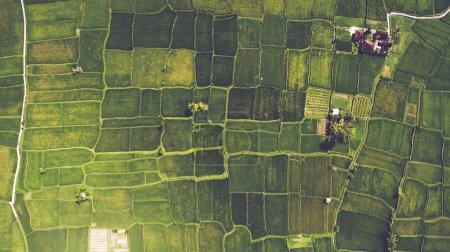 Photo pour Vue de dessus depuis le drone des magnifiques rizières avec de jeunes pousses vertes en velours dans le village balinais - image libre de droit
