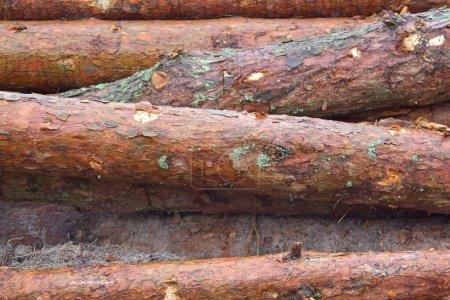 Photo pour Partie du tronc d'arbre brun gros plan Arrière-plan - image libre de droit