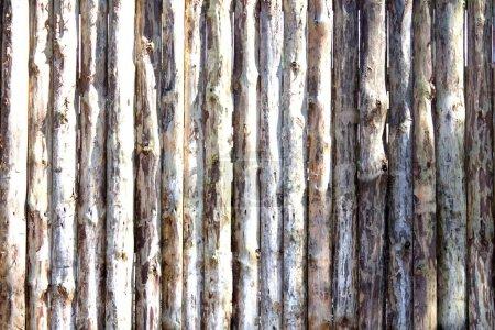 Photo pour Arrière-plan de vieux troncs d'arbres en bois close up Motifs en bois Textures - image libre de droit