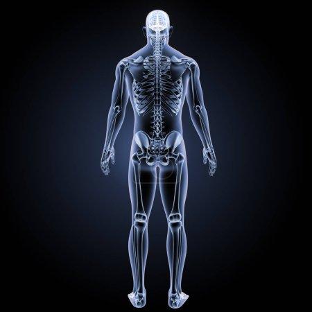 Photo pour Illustration 3d de cerveau humain vue postérieure - image libre de droit