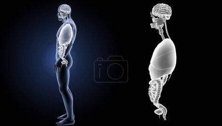 Human Organs View