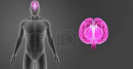Brain zoom with skeleton
