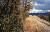 Landscape view beside a bush and dirt road in springtime