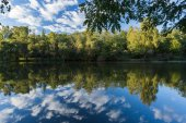 Trees and sky reflected on the surface of a pond. Nature photogr