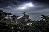 The Lone Cypress Tree in Monterey California Coast